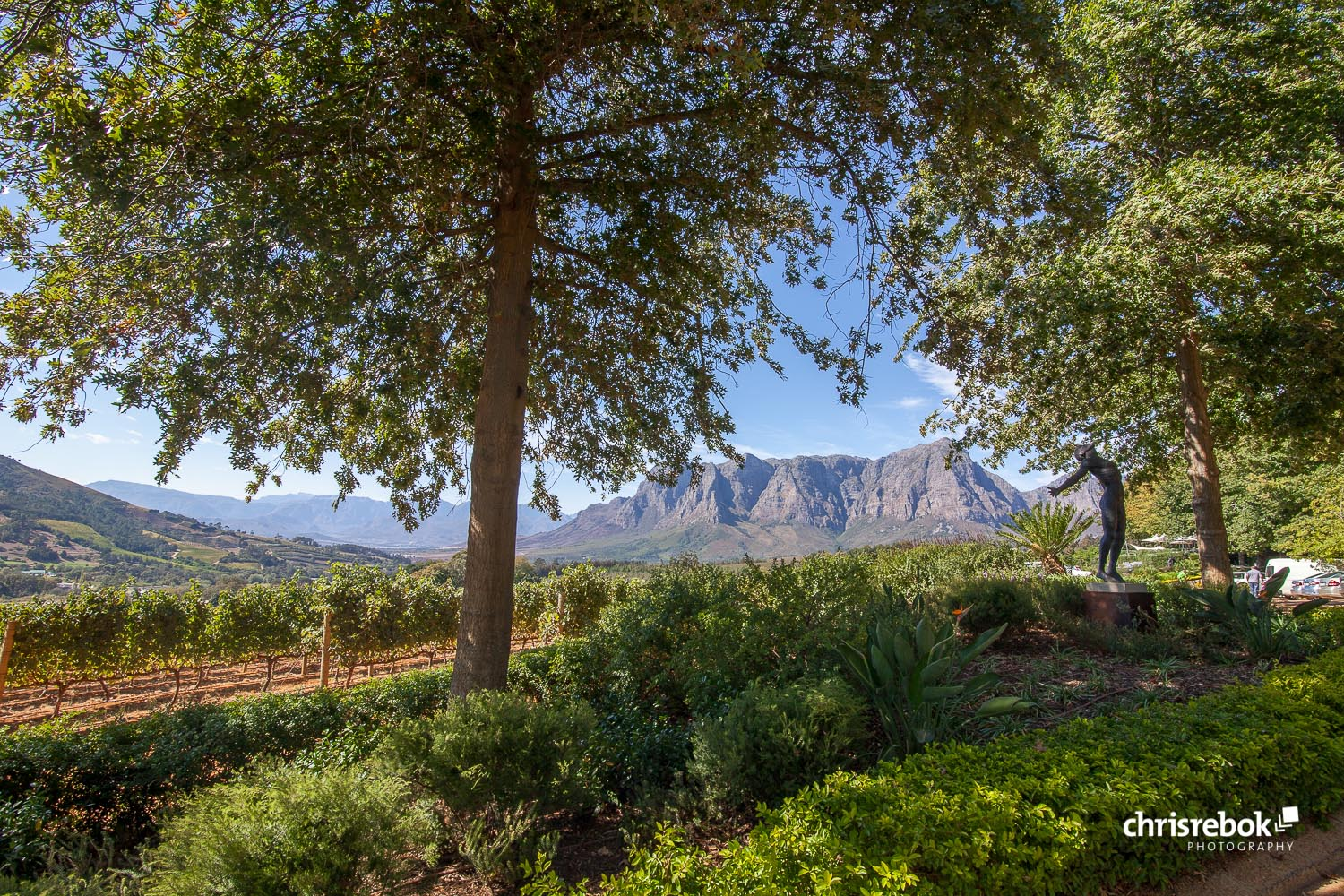 Photo of Falling For Stellenbosch, Stellenbosch